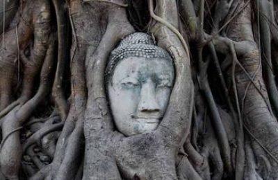 la cabeza de Buda en el árbol