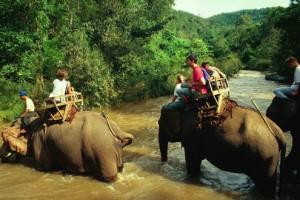 paseos en elefante en balsa