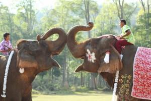 paseos elefante
