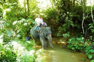 paseos elefante bosque