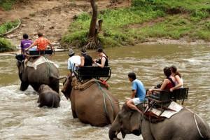 Paseos en agua con los elefantes