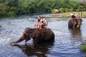 Kanchanaburi elefante