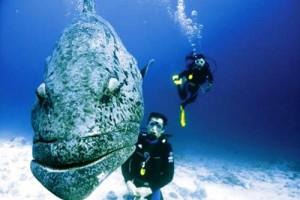 koh haa gran pez